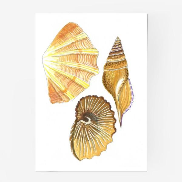 Постер «Ракушки»