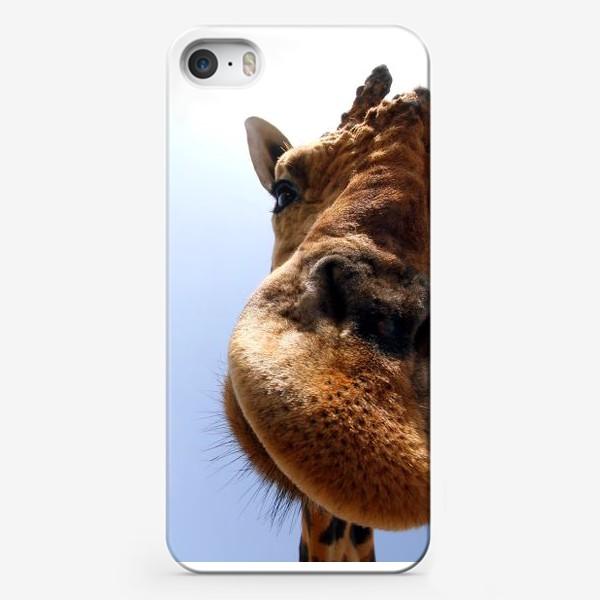 Чехол iPhone «Жираф 2»