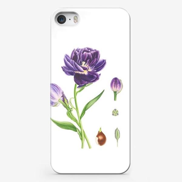 Чехол iPhone «Тюльпан. Ботаническая иллюстрация.»