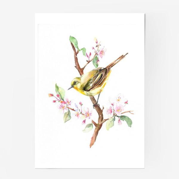 Постер «Весенняя птичка на ветке Акварель»
