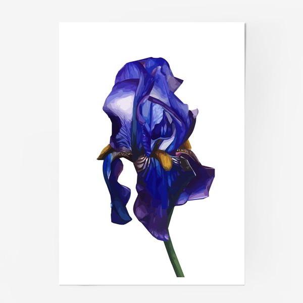 Постер «Синий Ирис»