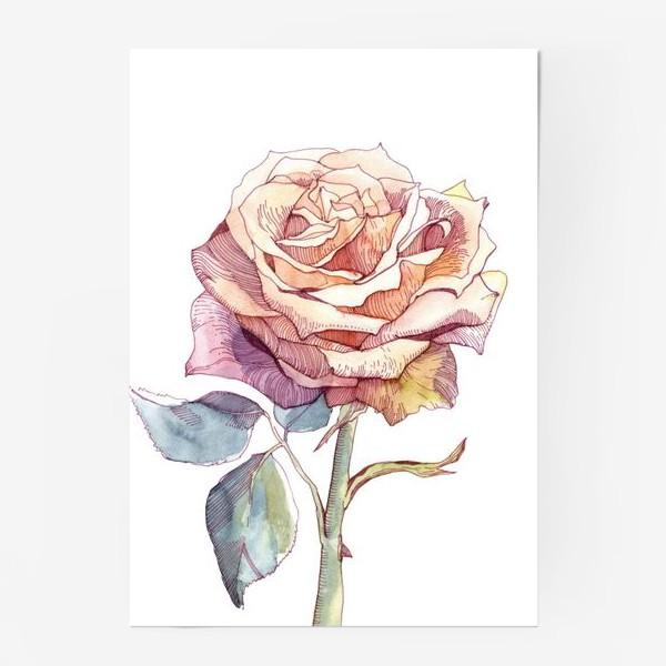 Постер «Персиковая роза»