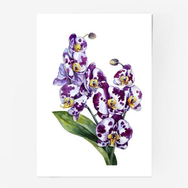 Постер «Пятнистая орхидея»