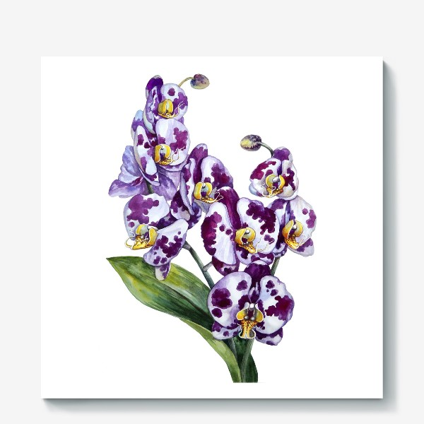 Холст «Пятнистая орхидея»