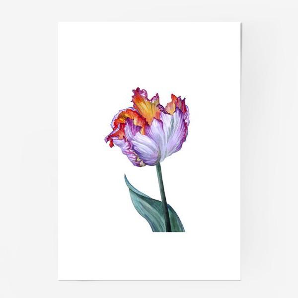 Постер «Тюльпан»