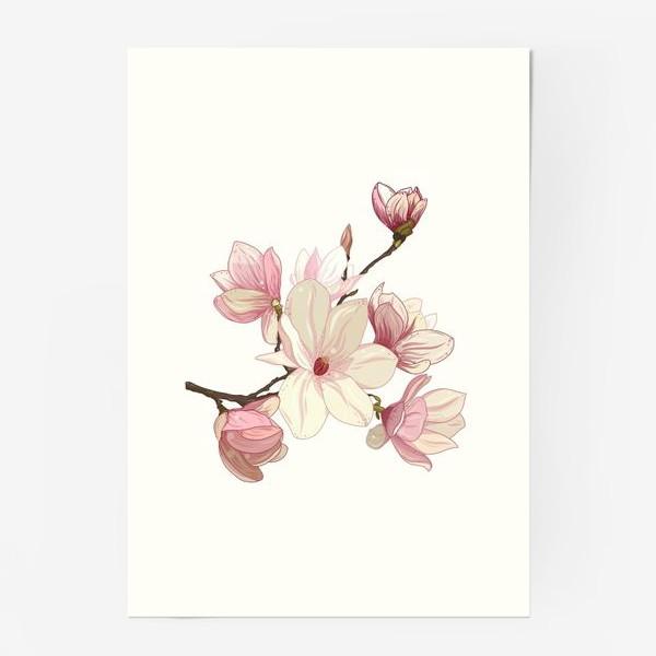Постер «Цветы магнолии. Нежные и прекрасные.»