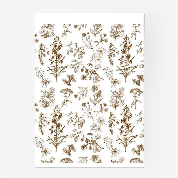 Постер «Летние полезные травы»
