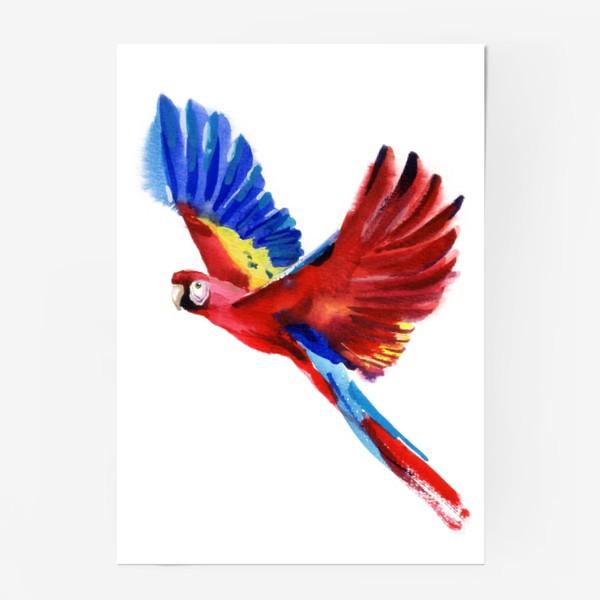 Постер «ПОПУГАЙ»