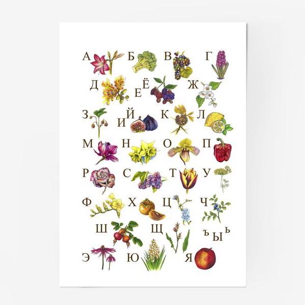 Постер «Алфавит Цветы и Фрукты»