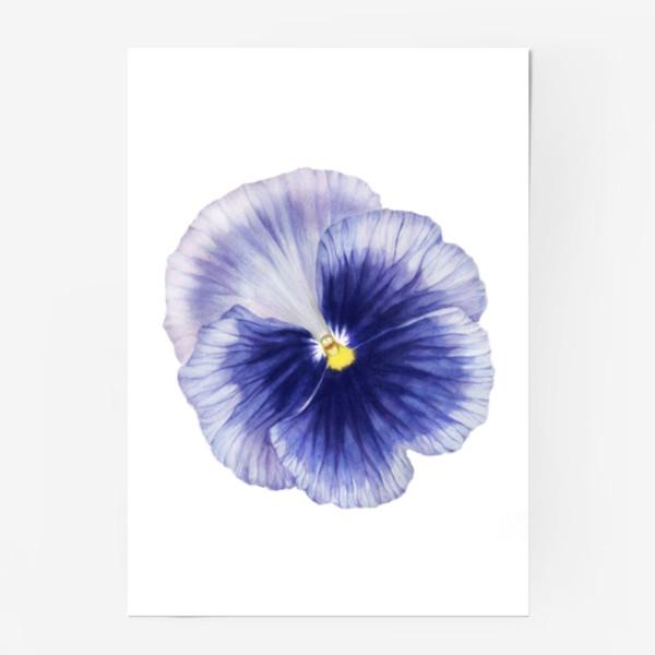 Постер «Фиалка Viola»