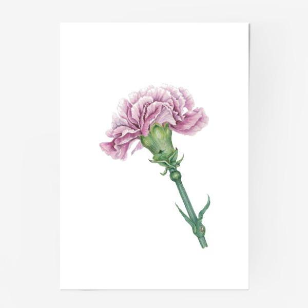 Постер «Розовая гвоздика ветка Carnation»