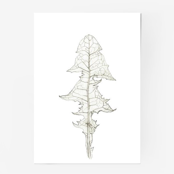 Постер «Лист одуванчика Dandelion Leaf»