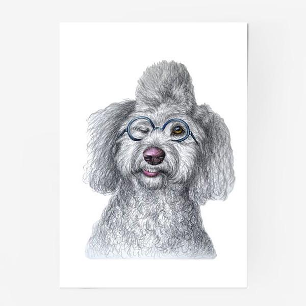 Постер «Собака в очках»