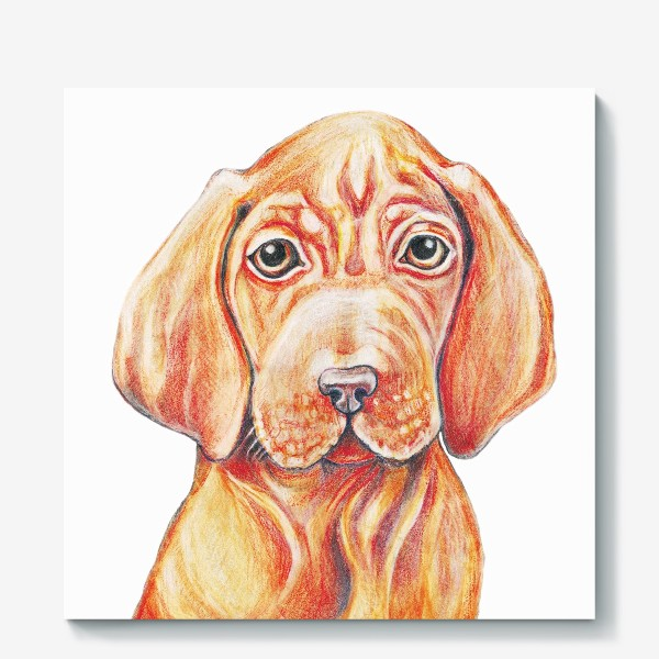 Холст «Собака, венгерская выжла,легавая»