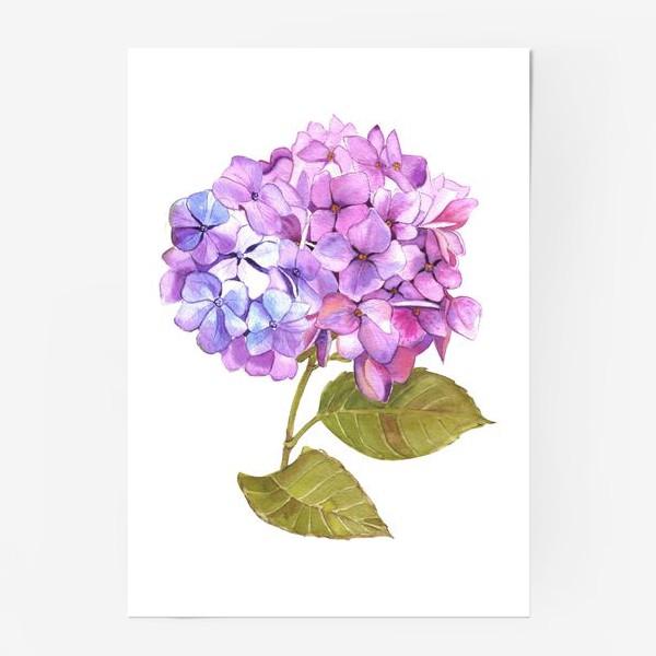 Постер «Розовая гртензия»
