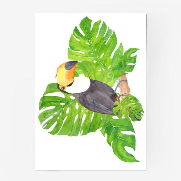 Постер «Птица тукан среди листьев монстеры. Тропический акварельный летний принт с попугаем на белом фоне»