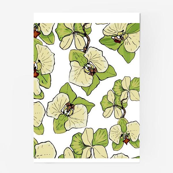 Постер «зеленая орхидея»