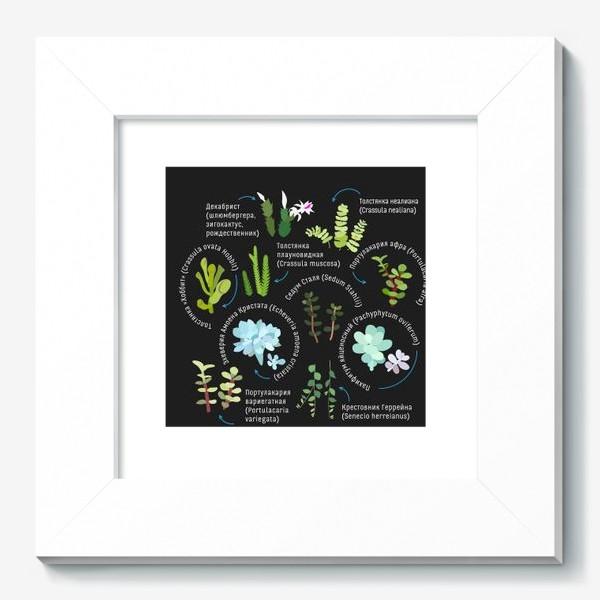 Картина «суккуленты. Домашние растения.»