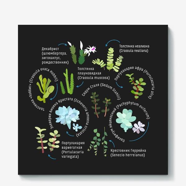 Холст «суккуленты. Домашние растения.»