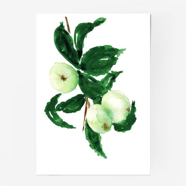 Постер «Молодые яблоки»