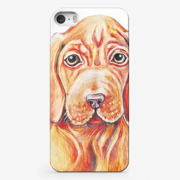 Чехол iPhone «Собака, венгерская выжла,легавая»