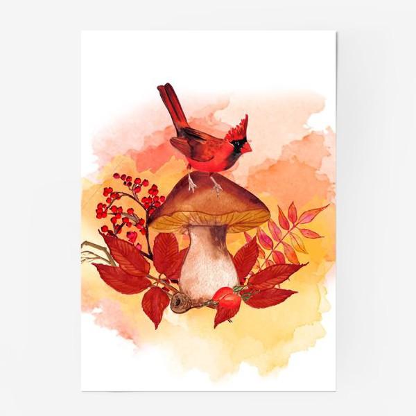 Постер «кардинал птица»