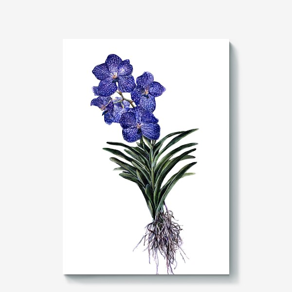 Холст «Орхидея Ванда»