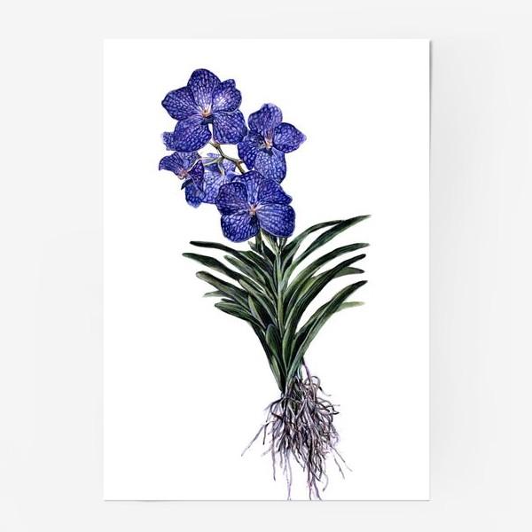 Постер «Орхидея Ванда»