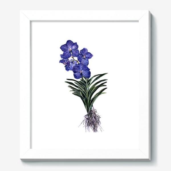 Картина «Орхидея Ванда»