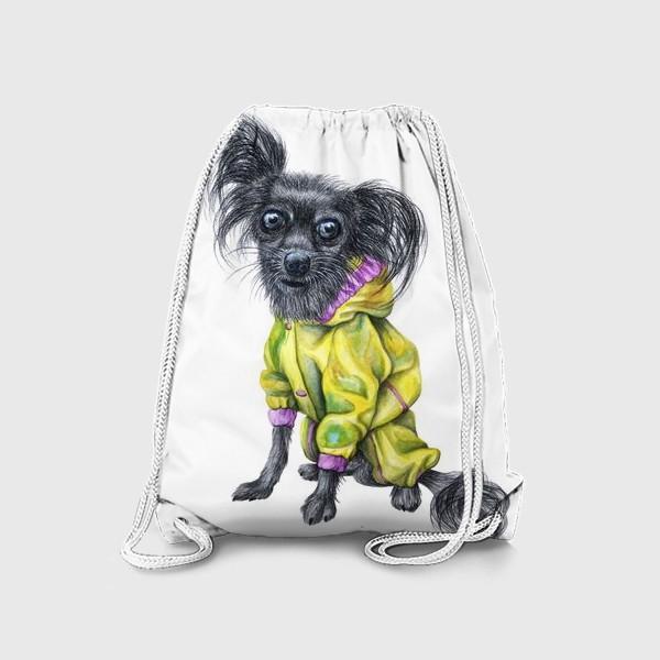 Рюкзак «Чихуахуа в одежде»