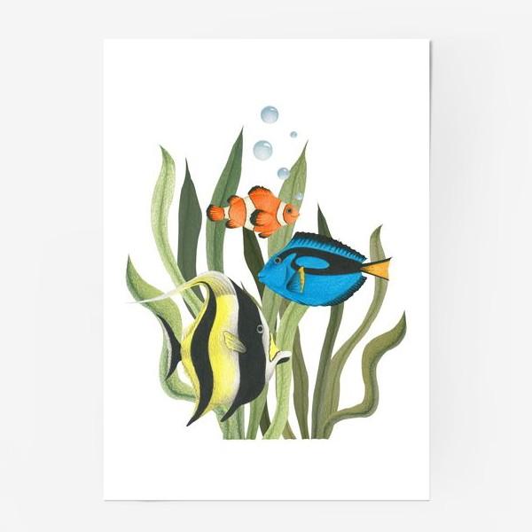 Постер «Океанические рыбки в водорослях»