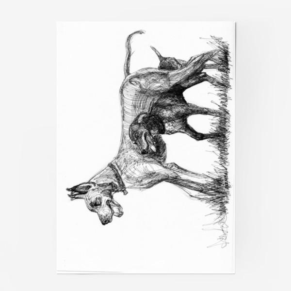 Постер «Дог и курцхаар»