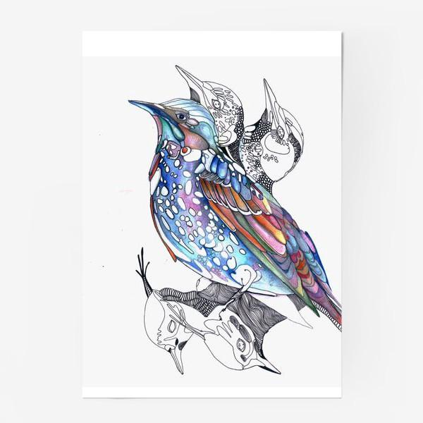 Постер «цветной скворец»