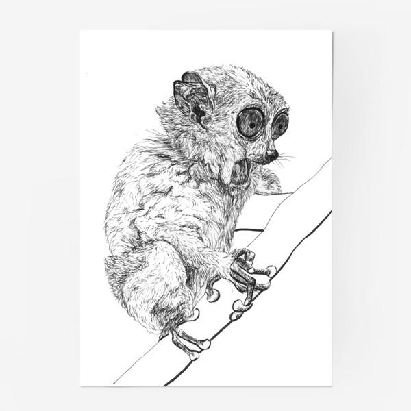 Постер «Толстый лори удивлен»