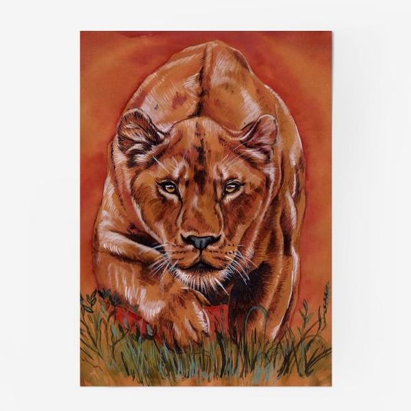 Постер «львиная охота »