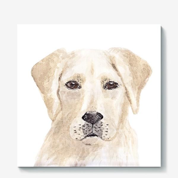 Холст «Собака лабрадор»