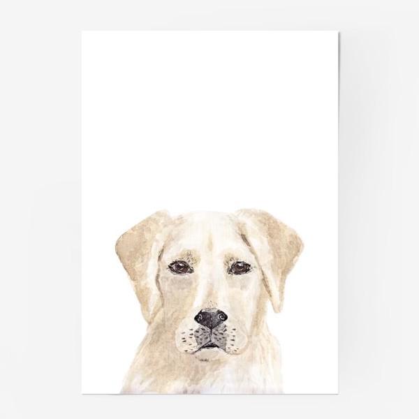 Постер «Собака лабрадор»
