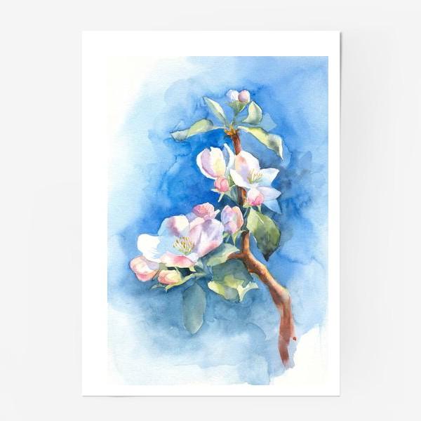 Постер «Цветы яблони»