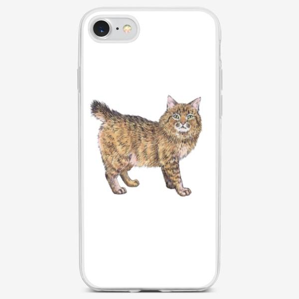 Чехол iPhone «Породистый котик пикси боб»