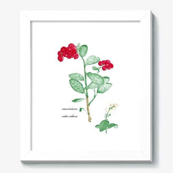 Картина «Брусника(vaccinium vitis-idaea)»