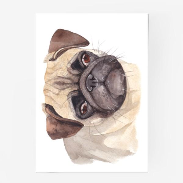 Постер «Грустный мопс»
