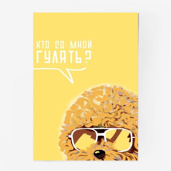 Постер «Кто со мной гулять? Пудель в очках. Жизнь после карантина»