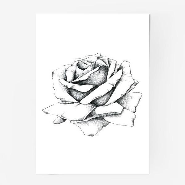 Постер «Роза»