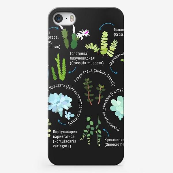 Чехол iPhone «суккуленты. Домашние растения.»