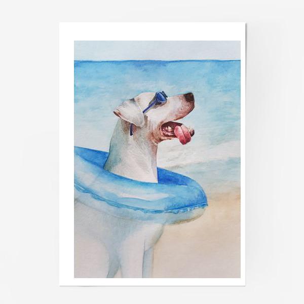 Постер «Собака в очках и с надувным кругом»