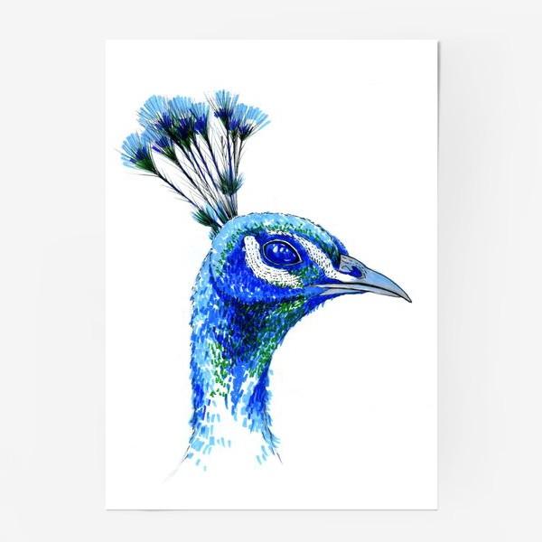 Постер «Синий Павлин»