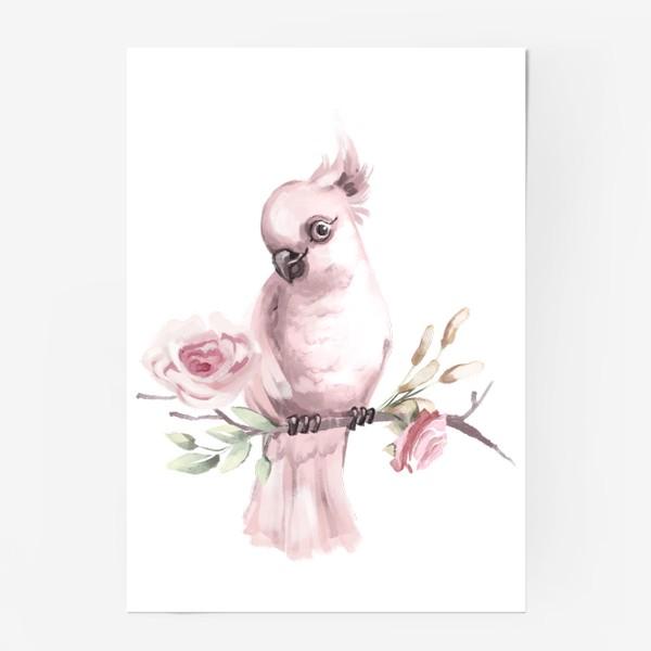 Постер «Розовый попугай»