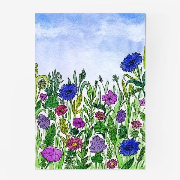 Постер «Полевые цветы. Василёк»