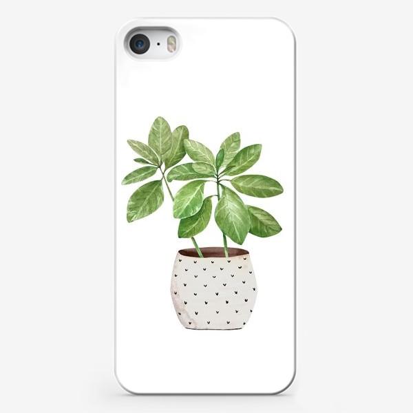 Чехол iPhone «зеленое комнатное растение в горшке, крупным планом на белом фоне иллюстрации акварель»