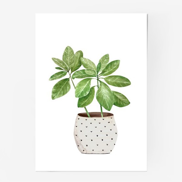 Постер «зеленое комнатное растение в горшке, крупным планом на белом фоне иллюстрации акварель»